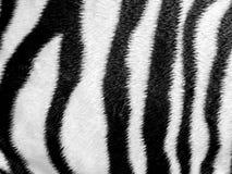 Zebramuster-Kunstledergewebe Stockfoto