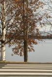 Zebrapad aan meer en lijn van bomen Rovaniemi Finland stock afbeeldingen