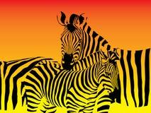 zebras κοπαδιών Στοκ Εικόνα