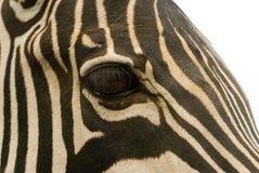 zebras ματιών Στοκ φωτογραφία με δικαίωμα ελεύθερης χρήσης