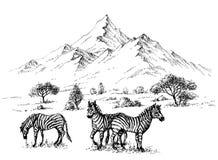 Zebras στην αγριότητα Στοκ φωτογραφία με δικαίωμα ελεύθερης χρήσης