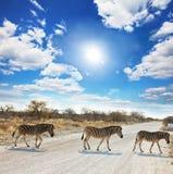Zebras Royalty Free Stock Photography