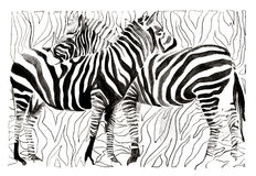 Zebras Stock Afbeelding