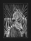 Zebras. Hand work graphic, african two zebras illustration drawing, white pan on black paper Stock Photos