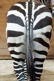Zebras ass Royalty Free Stock Photos