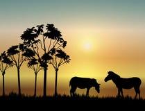 Zebras bij Zonsopgang Royalty-vrije Illustratie