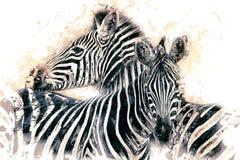 Zebras (burchellii do equus) Imagens de Stock