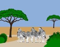 Zebras, die auf Straße stillstehen Lizenzfreie Stockbilder
