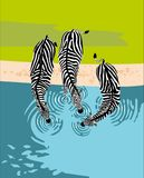 Zebras drinkt water, hoogste mening vector illustratie