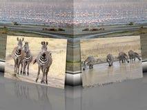 Zebra Equus burchellii with african savanna landscape vector illustration