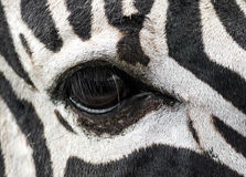 Zebras eye Royalty Free Stock Photography