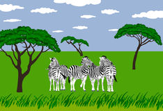 Zebras in grassland. Illustration of a group 5 zebras standing in grassland in an african scenery Stock Photo