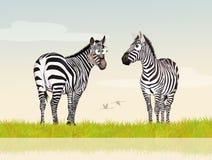 Zebras in the jungle Stock Photo