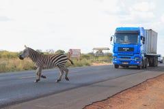 Zebras kreuzen die Straße in Nationalpark Tsavo kenia lizenzfreie stockbilder