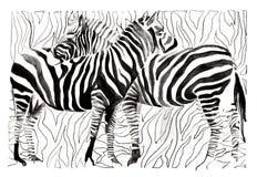 Zebras vector illustration