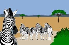 Zebras que descansam na estrada ilustração royalty free