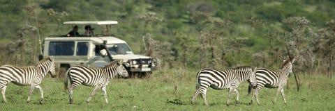 Zebras que passam na frente de 4X4 Imagens de Stock