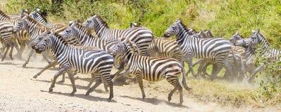 Zebras running at the plains of Serengeti Stock Image