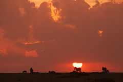 Zebras silhouetted against sunset Stock Image
