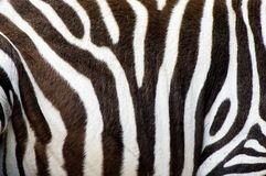 Zebras skin Royalty Free Stock Photography