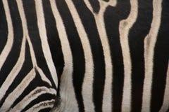 Zebras texture Stock Photo