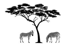 Zebras under the tree illustration Royalty Free Stock Photos