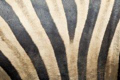 Zebrashuid en bont Royalty-vrije Stock Foto's