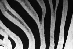 Zebrastreifen Stockfotos