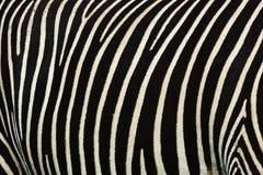 Zebrastreifen Stockfotografie