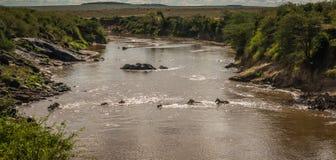 Zebre e gnu durante la migrazione da Serengeti ai masai m. Immagini Stock