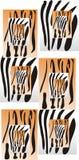 Zebre e tigri Fotografia Stock