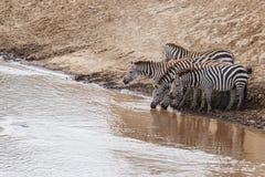Zebry Mara rzeki w Kenja skrzy?owanie zdjęcia stock