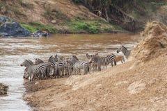 Zebry Mara rzeki w Kenja skrzy?owanie zdjęcie stock