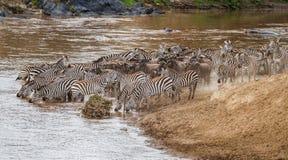 Zebry Mara rzeki w Kenja skrzy?owanie obraz royalty free