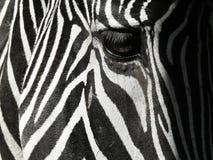 Zebry oka zbliżenie obraz royalty free