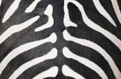 Zebry skóra Obraz Stock