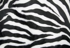 Zebry tekstura Fotografia Stock