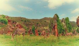 Zebry w Cabarceno Zdjęcia Stock