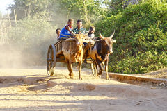 Zebu cart on the sandy road going through the Avenida the Baobab Royalty Free Stock Images