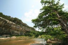Zeder-Baum auf Guadalupe-Fluss lizenzfreies stockfoto
