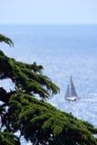Zeder mit Segelnboot Lizenzfreies Stockfoto