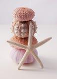 Zeeëgels en zeester Stock Fotografie