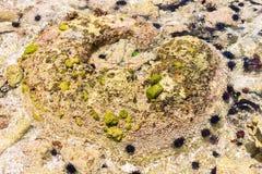 Zeeëgels op de oceaanbodem Stock Foto's