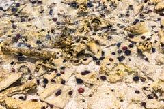 Zeeëgels op de oceaanbodem Royalty-vrije Stock Afbeelding