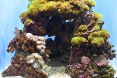 Zeeanemoon in Acadamy van Park van het Wetenschapsgolden gate, 2 stock afbeelding