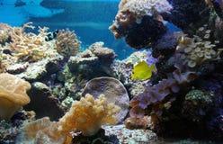 Zeeanemoonsinaasappel onderwater royalty-vrije stock afbeelding