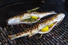 Zeebaars met citroen en rozemarijn op de grill wordt gevuld die Stock Fotografie