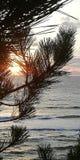 Zeegezicht De het plaatsen zon door de naalden van pijnboom vertakt zich royalty-vrije stock afbeeldingen