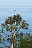 Zeegezicht dichtbij Cinque Terre in Ligurië Een Agavebloem in de voorgrond en een blauwe overzees met golven en rotsen Dorp van stock afbeelding