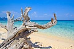 Zeegezicht en hout op het strand Stock Foto